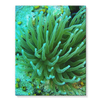 Underwater Coral Reef Stretched Eco-Canvas 11X14 Wall Decor