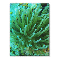 Underwater Coral Reef Stretched Eco-Canvas 18X24 Wall Decor