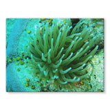 Underwater Coral Reef Stretched Eco-Canvas 24X18 Wall Decor