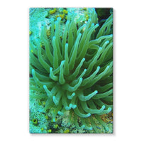Underwater Coral Reef Stretched Eco-Canvas 24X36 Wall Decor