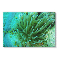 Underwater Coral Reef Stretched Eco-Canvas 36X24 Wall Decor