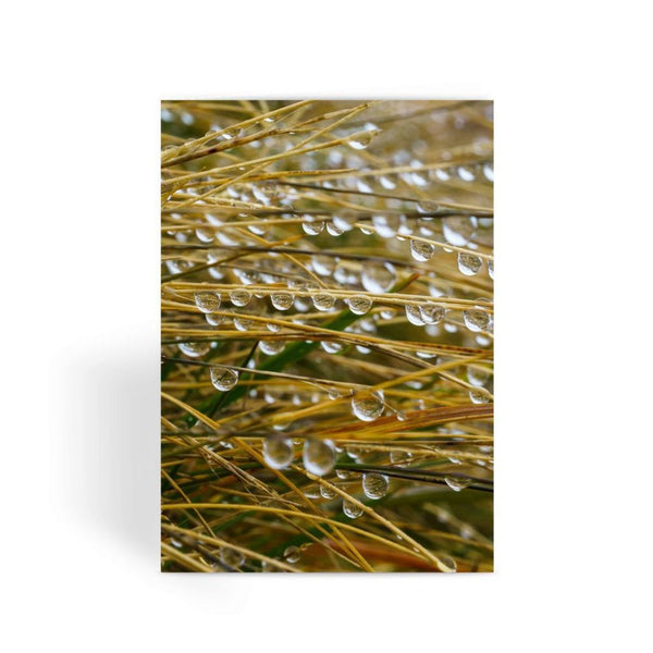 Water Droplets In The Straw Greeting Card 1 Prints