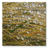 Water Droplets In The Straw Stretched Eco-Canvas 10X10 Wall Decor