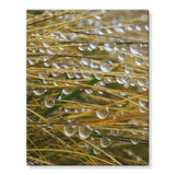 Water Droplets In The Straw Stretched Eco-Canvas 11X14 Wall Decor
