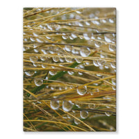 Water Droplets In The Straw Stretched Eco-Canvas 18X24 Wall Decor