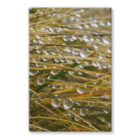 Water Droplets In The Straw Stretched Eco-Canvas 20X30 Wall Decor