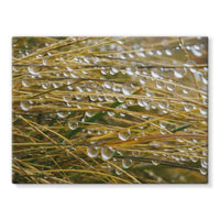 Water Droplets In The Straw Stretched Eco-Canvas 24X18 Wall Decor