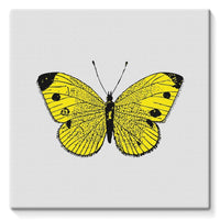 Yellow Comic Butterfly Stretched Canvas 14X14 Wall Decor