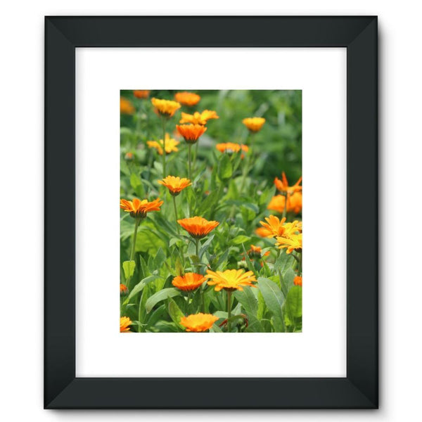 Yellow Flowers Fields Framed Fine Art Print 12X16 / Black Wall Decor