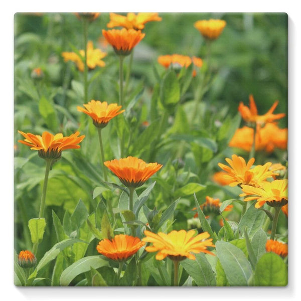 Yellow Flowers Fields Stretched Canvas 10X10 Wall Decor