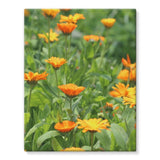 Yellow Flowers Fields Stretched Eco-Canvas 11X14 Wall Decor