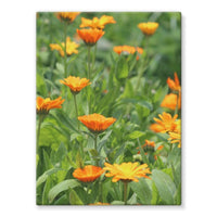 Yellow Flowers Fields Stretched Eco-Canvas 18X24 Wall Decor