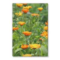 Yellow Flowers Fields Stretched Eco-Canvas 24X36 Wall Decor