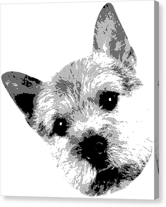 Maddy - Canvas Print
