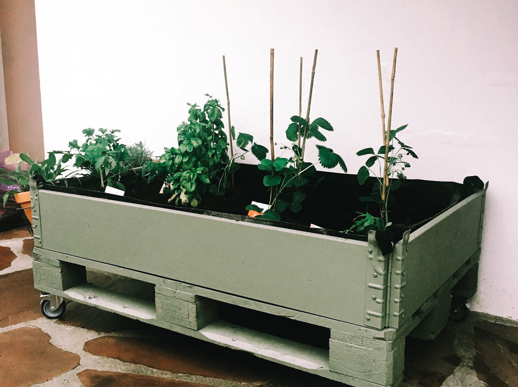 DIY: create a kitchen garden