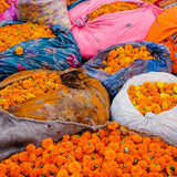 Adventures With Marigolds | A Boutique Tour To India | March '20