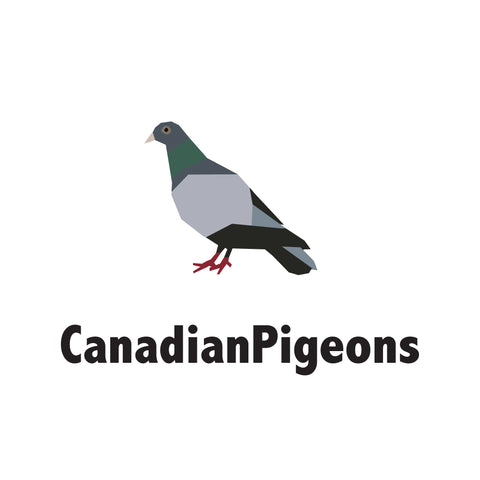 CanadianPigeons.com