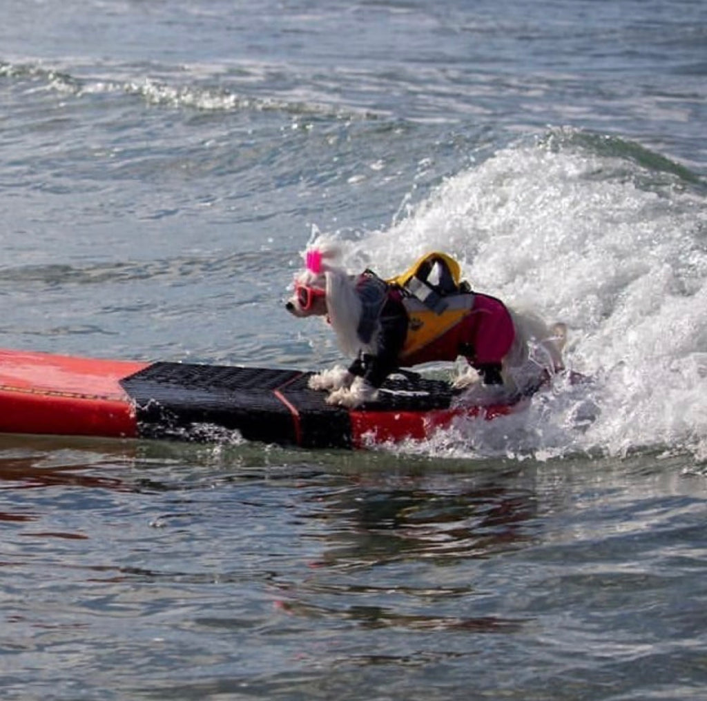 Have you ever wondered if dogs can surf?