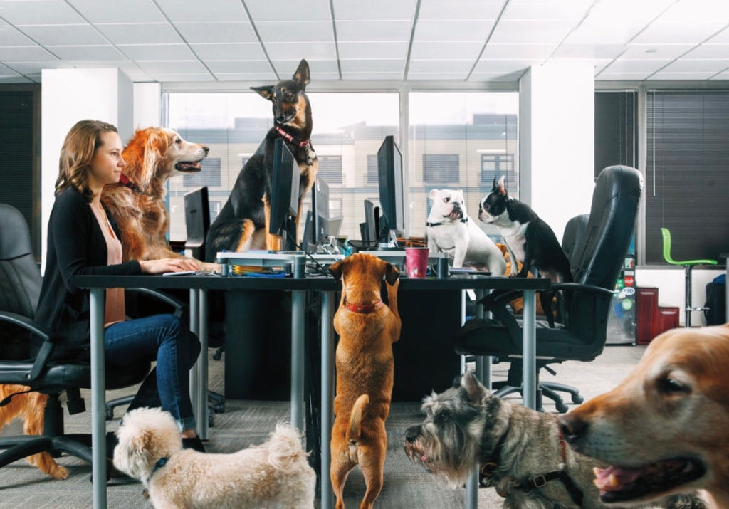 Office Dogs Are The Best!!!! 8 Handy Office Dog Tips from Funky Pet Zones