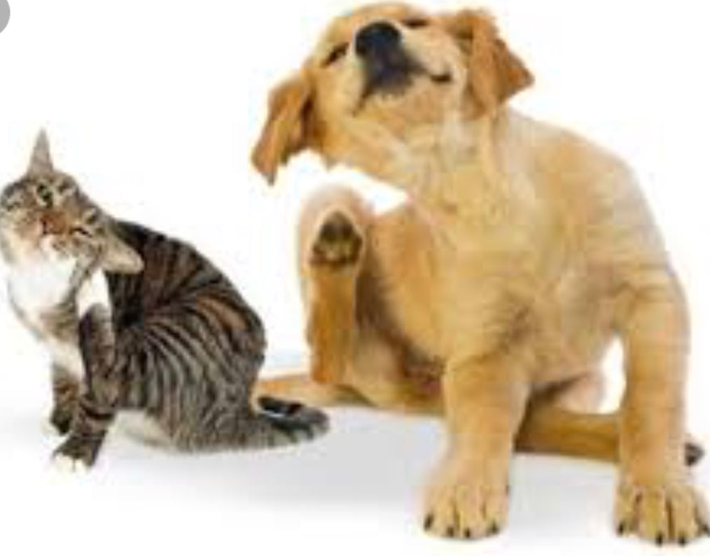 Does Your Pet Have Itch-uess