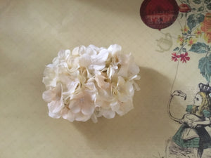 HELENA - hydrangea hairflower - Ivory
