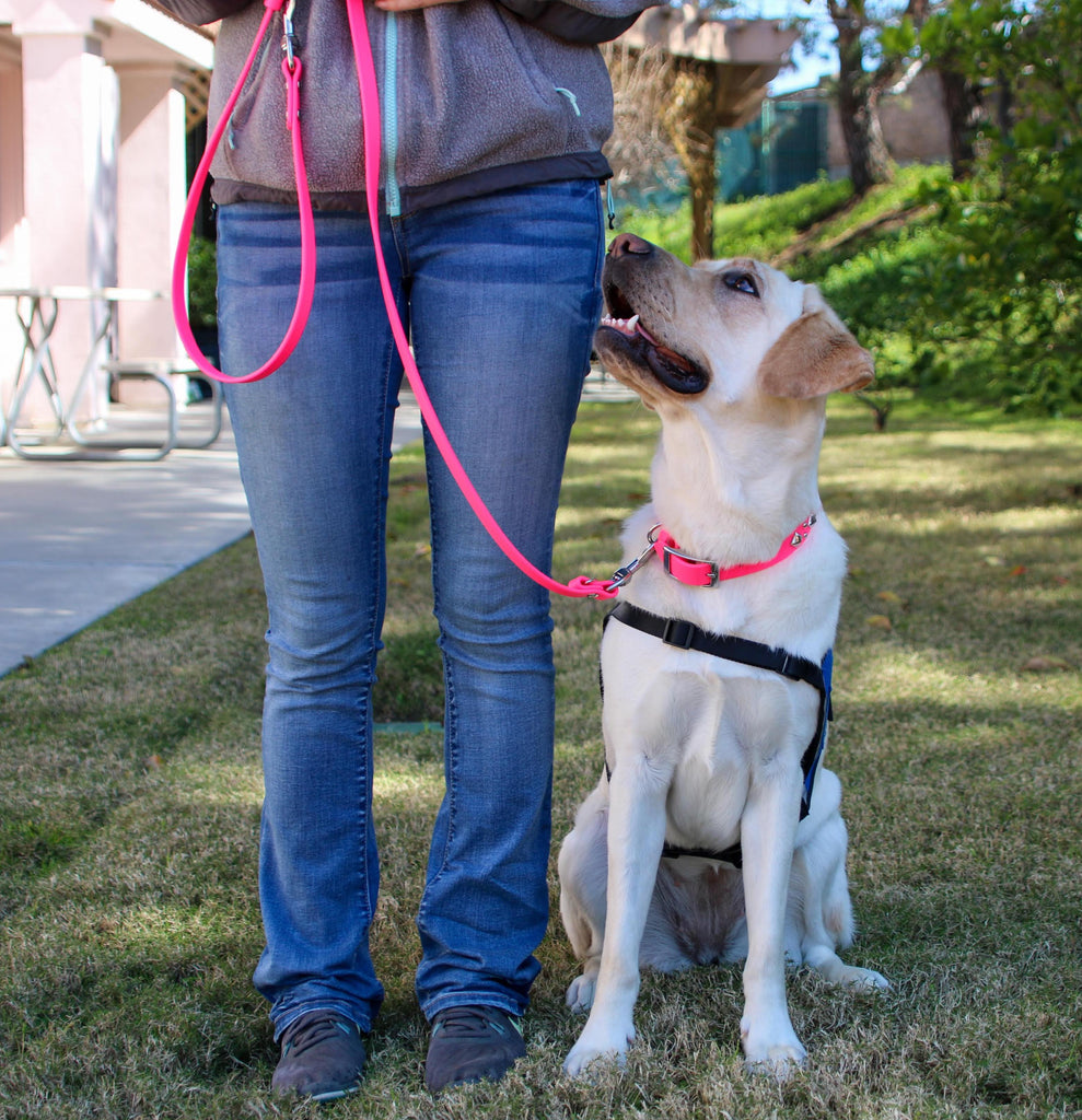 SimpleLead Multifunctional Leash