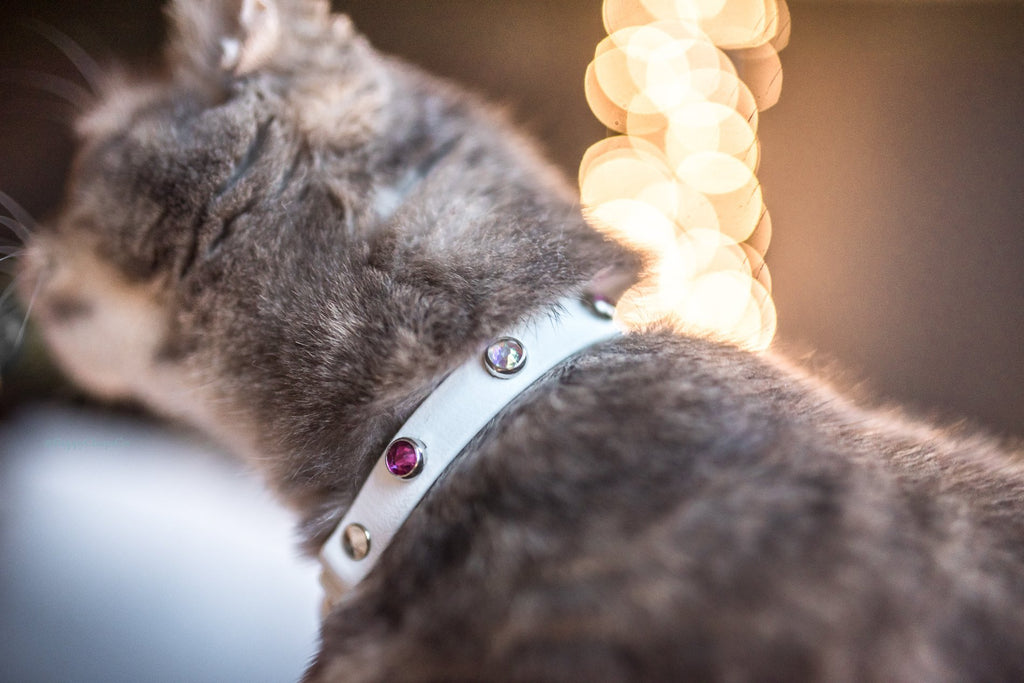 'Lucy in the Sky' Katmai Collar