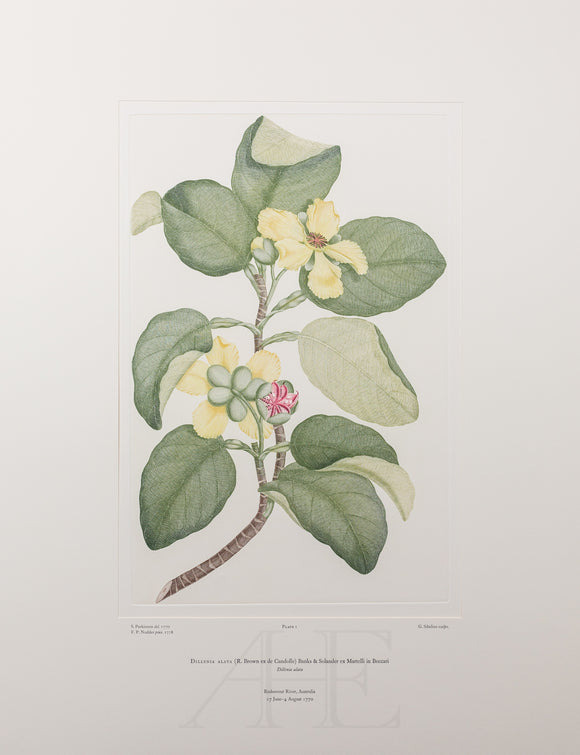 All Banks' Florilegium Prints