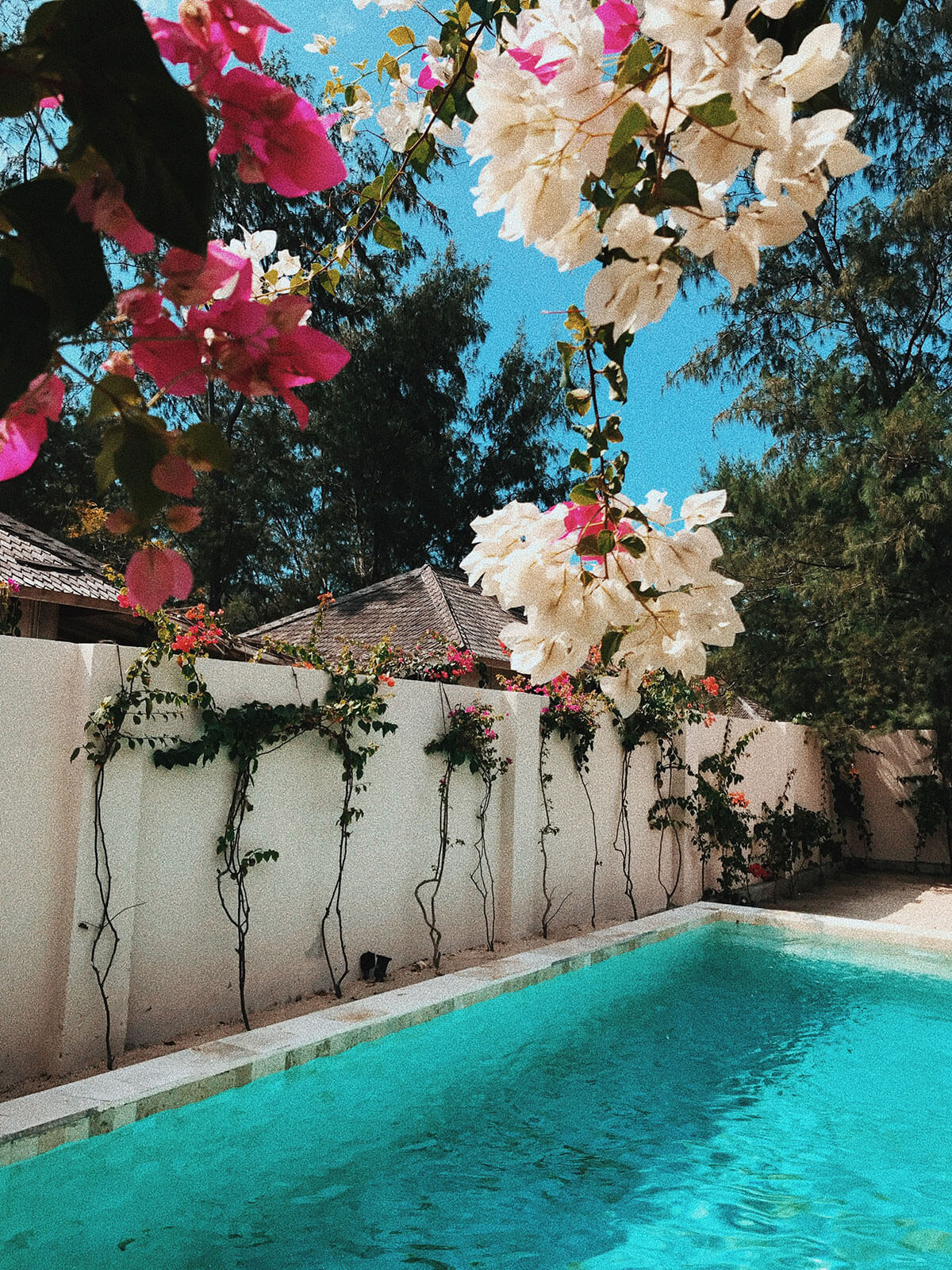 avia-pool-flowers