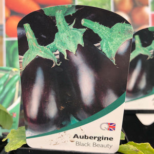 Aubergine plant 'black beauty' 9cm pot