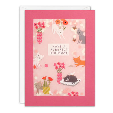 PL3526 - Cat Pattern Paper Shakies Card