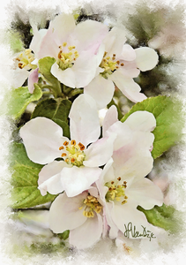 Apple Blossom Cluster Digital Painting