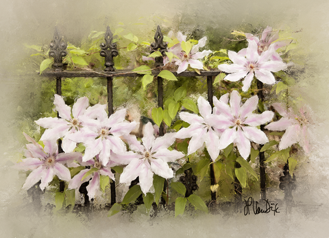 Pink Clematis Digital Painting