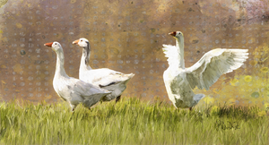 Geese Digital Painting (PD_009)