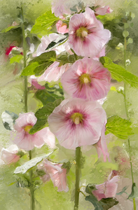 Pink Hollyhocks Digital Painting
