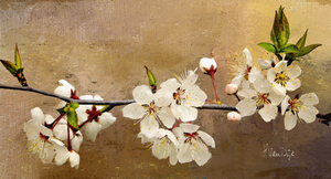 Wild Cherry Blossoms Digital Painting