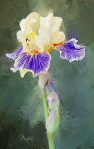 Yellow Purple Iris Digital Painting