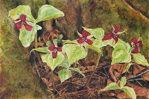 Red Trilliums - Watercolour Painting