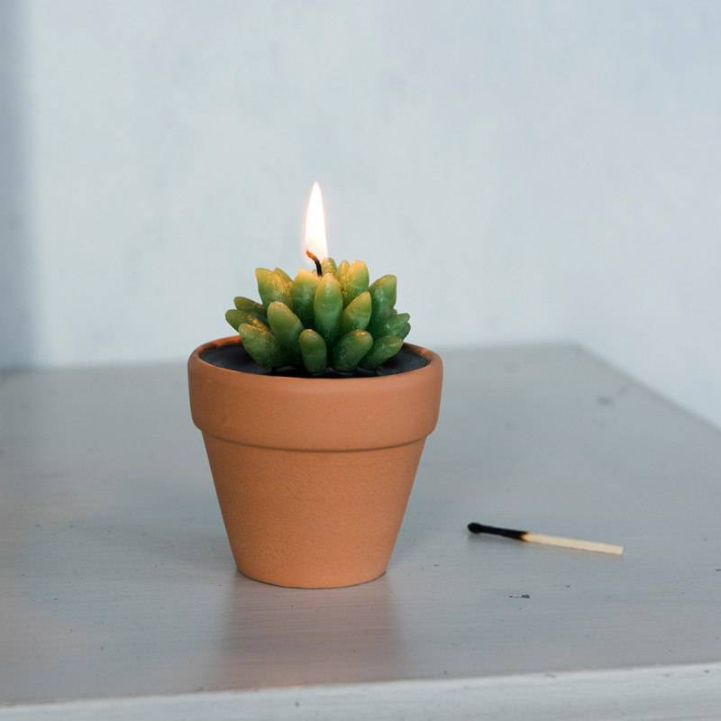 Cactus candle in a pot.