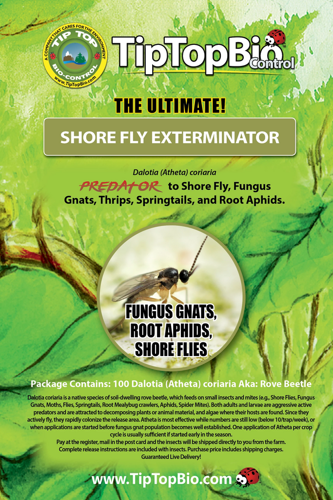 Shorefly Exterminator - Mail Back