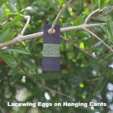 Green lacewing Eggs - Hanging Card