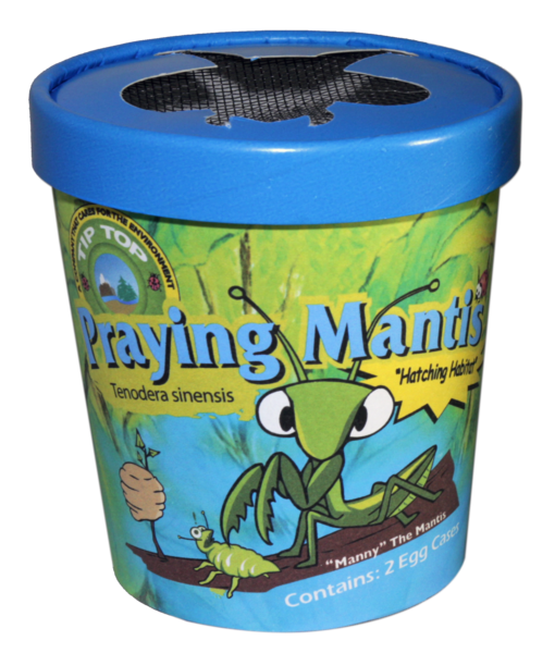 Praying Mantis Tip Top Bio Control Beneficial Insects