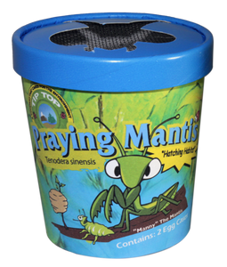 Praying Mantis - Cup