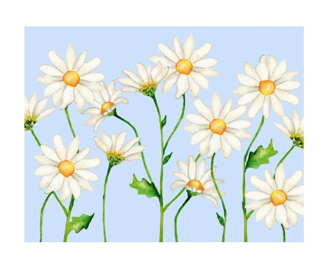 Daisy Folded Note Cards
