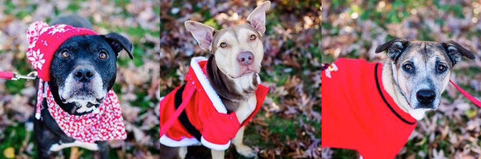 A Home for the Holidays: things to know when adopting a dog