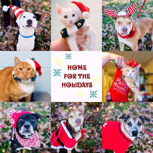 SPCA Home for the Holidays
