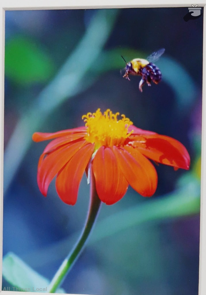 Anticipating Pollination - Matted Photography (Close-Up Of Bee Hovering Over Flower) Art &