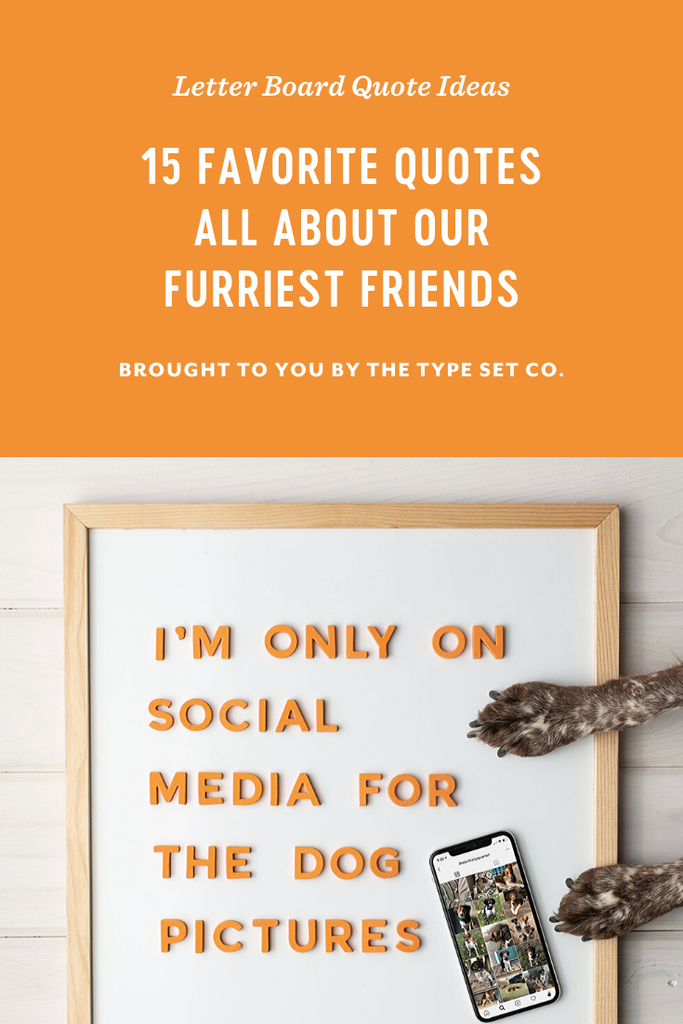 15 Fabulous Letter Board Quotes All About Our Furry Friends