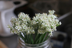 Garlic Chive Flowers, Pollinators, and Fermentation