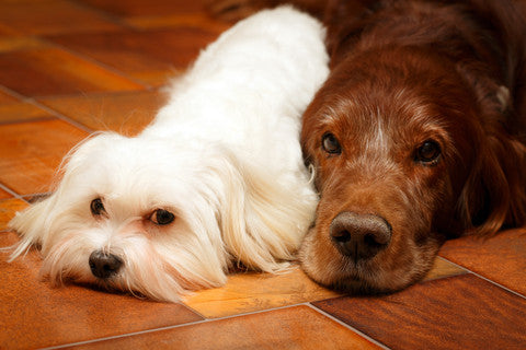 Best Hardwood Floors for Dog Owners